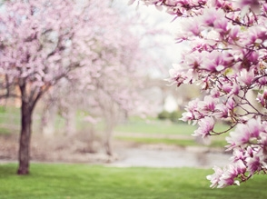 Idzie wiosna :)
